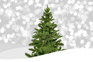 I år råder det brist på granar inför julen